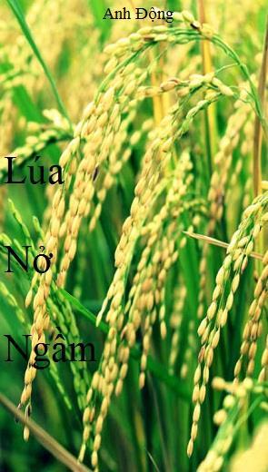 Lúa Nở Ngầm